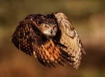 Photo and caption by Mark Bridger:Nature:National Geographic Photo Contest.jpg